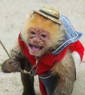 Fisherman's wharf monkey