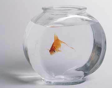 GoldfishInBowl